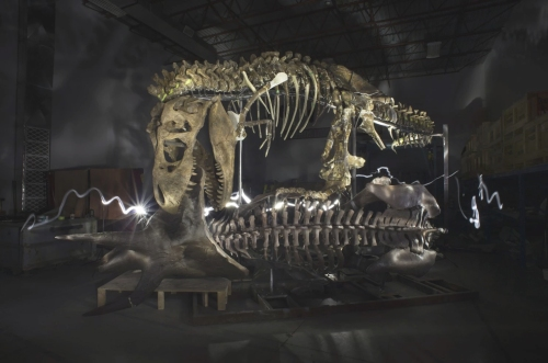 The Nation's T. rex was temporarily assembled in the RCI workshop for inspection by Smithsonian staff. Source