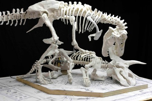 A 3-D printed model of the skeleton was used to plan the pose. Source
