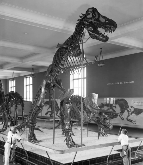 Image courtesy of the AMNH Archives.