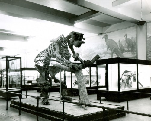A postcard of the north end of Hall 38, featuring a South American giant sloth and other Cenozoic mammals.