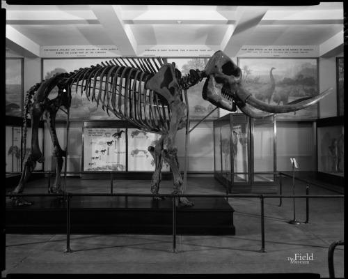 hall 38 mastodon