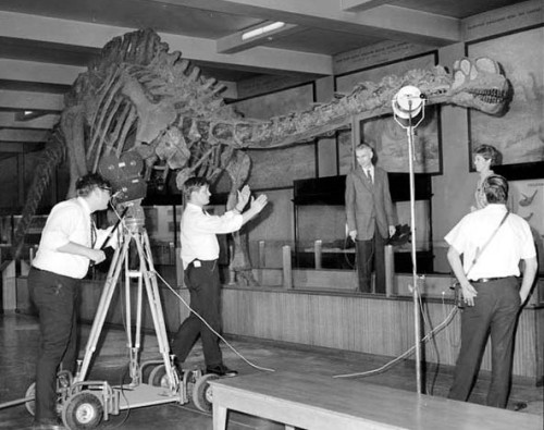 apatosaurus revised