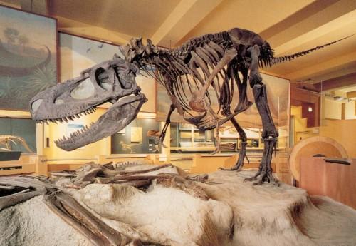 life over time albertosaurus remount