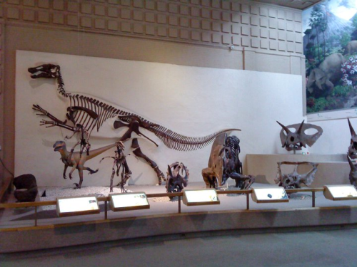In the great hall of dinosaurs