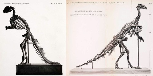 The Hawkins Hadrosarus and Dollo Iguanodon. Photos from