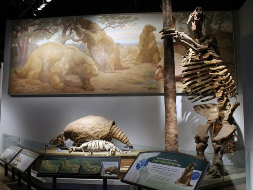 old riggs mounts, new sloth, charles knight