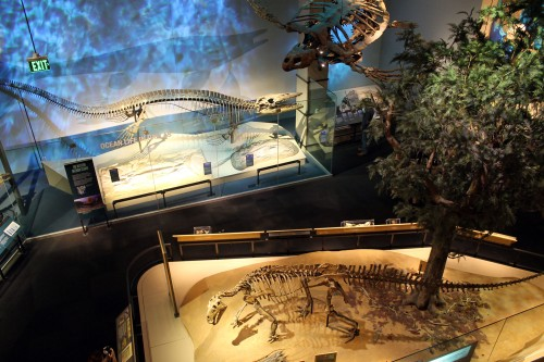 mosasaur and texas ornithiscians