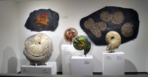 Pretty ammonites with donor names prominently displayed send the wrong message. Photo by the author.