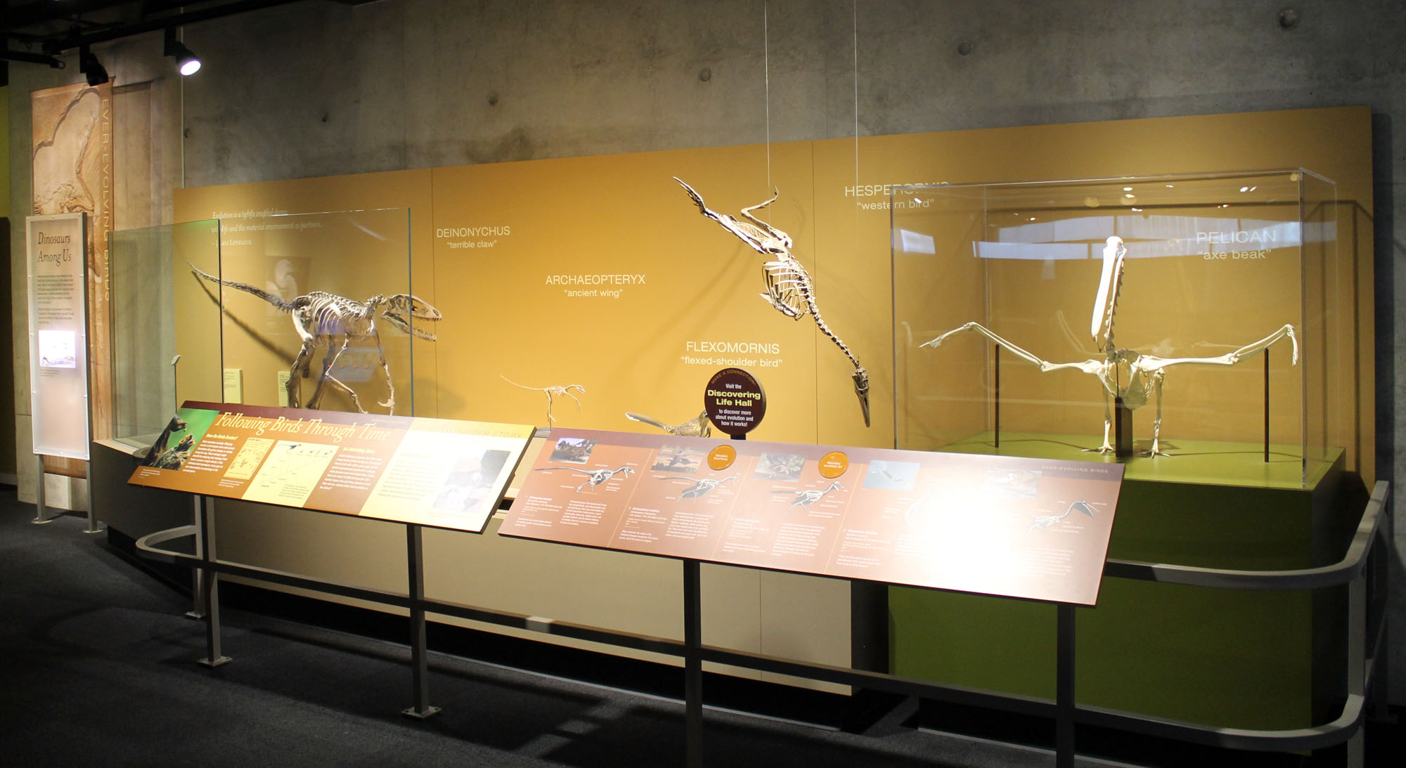 fossils | EXTINCT MONSTERS