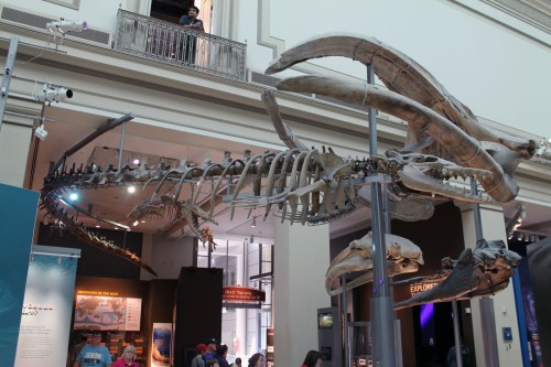 The historic Basilosaurus