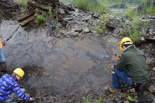 Splitting shale at the Solite Fossil Site.