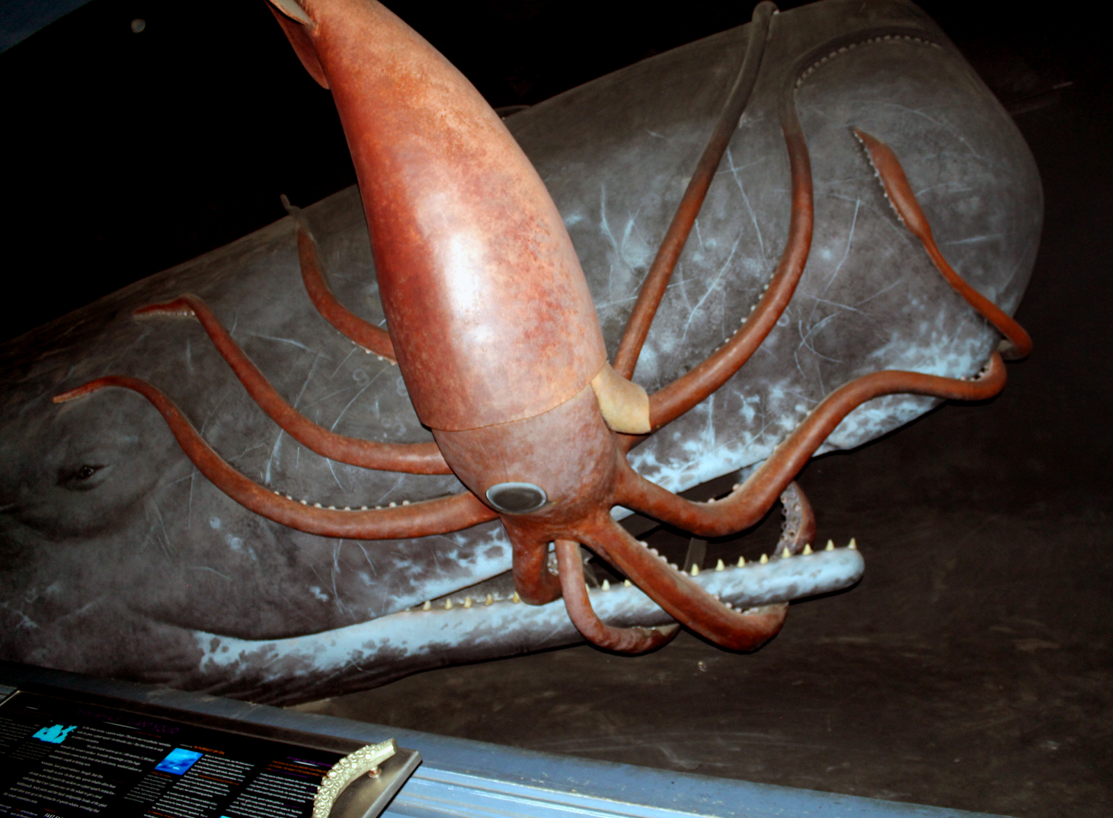 colossal squid mouth pictures to pin on pinterest pinsdaddy