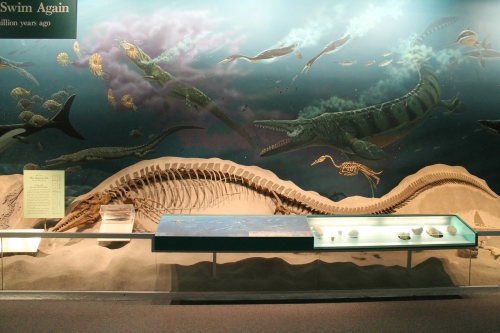 Tylosaurus photo by the author
