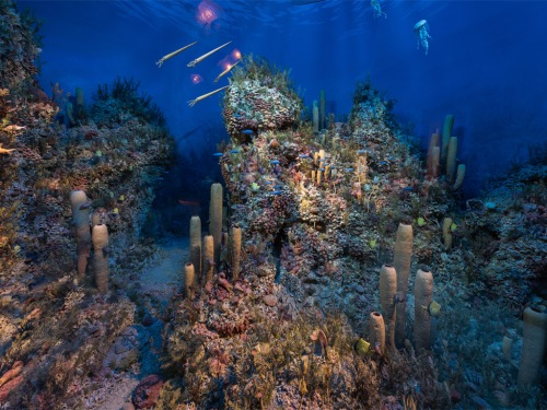 The Permian reef at the Midland Petroleum Museum. I stupidly never took a picture of the NMNH version.