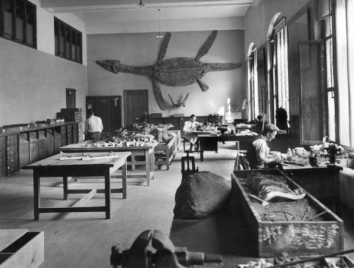USNM prep lab 1913