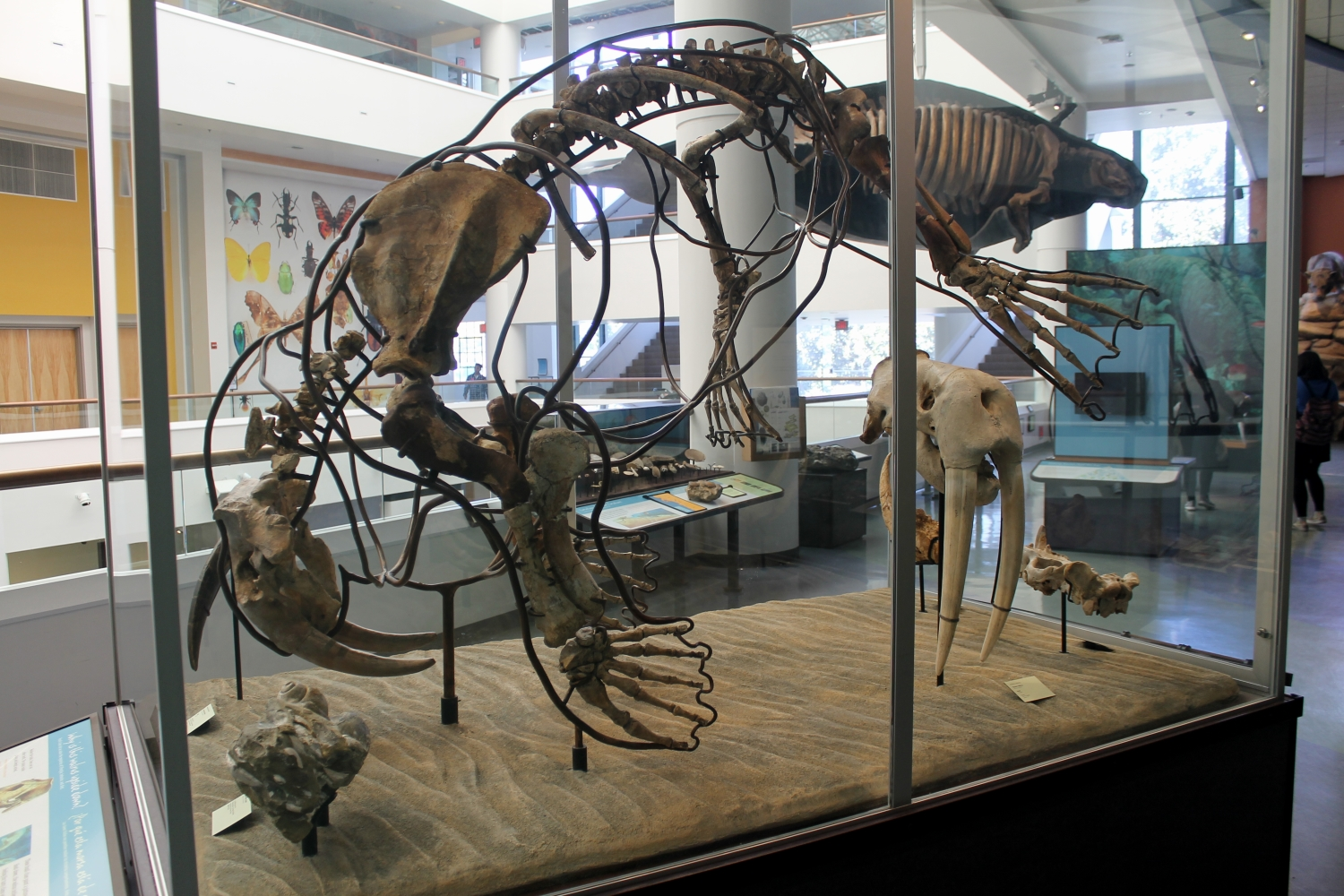 Fossil Mounts Extinct Monsters Rg I Am The Valenictus