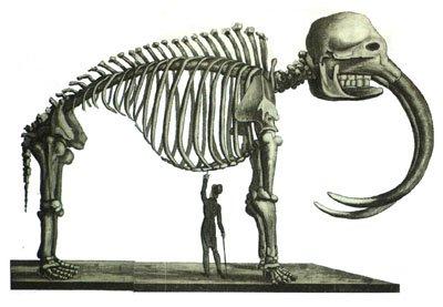pealemammoth