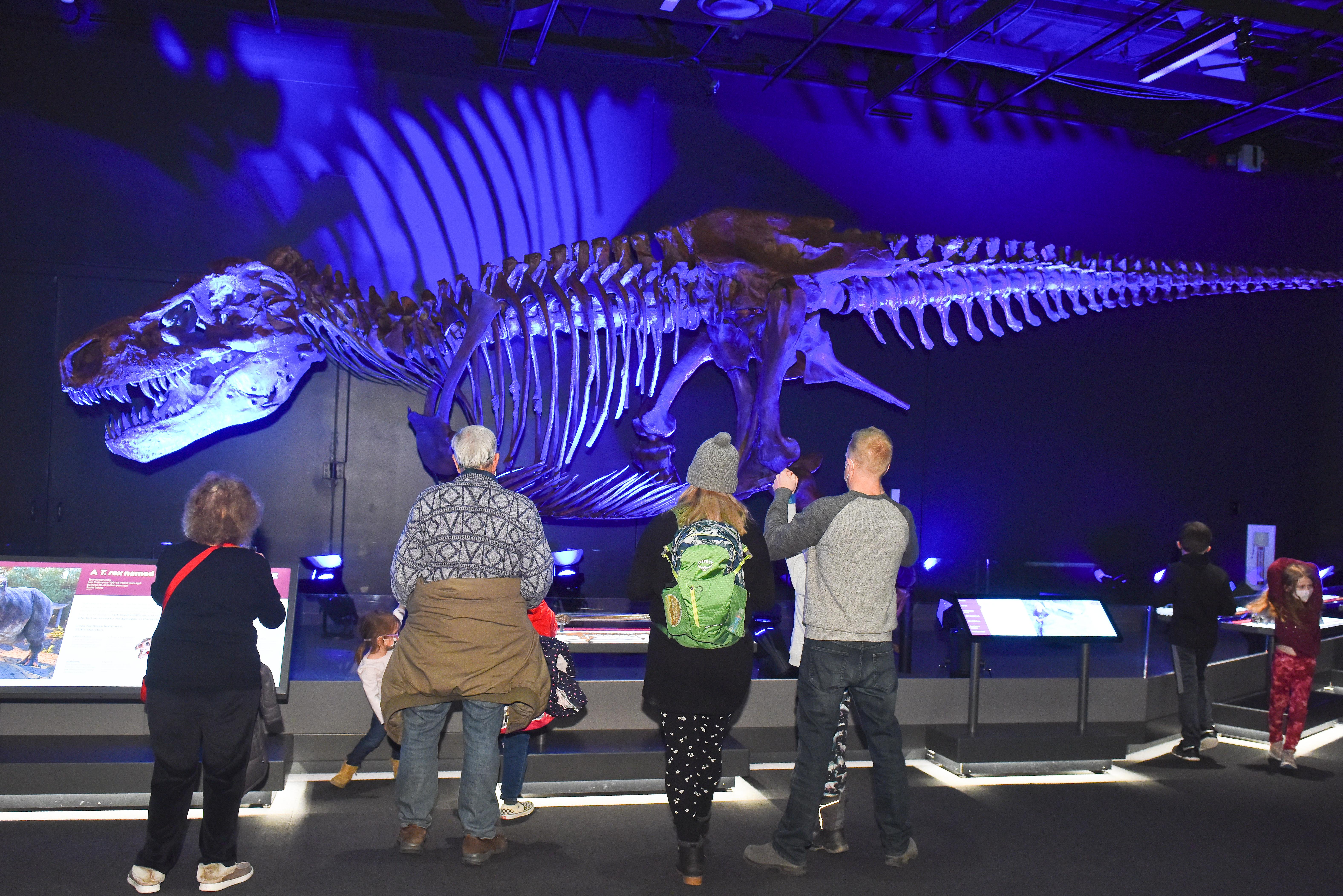 DMNS T.Rex
